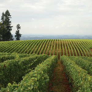 Visit local tasting rooms and experience Oregon's fantastic wine country with the 2020 Wine Glass Pass.